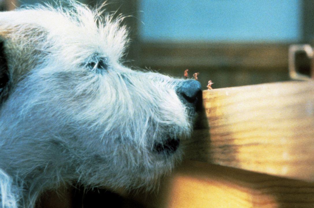 Der Familienhund traut seinen Augen kaum ... - Bildquelle: Walt Disney Pictures