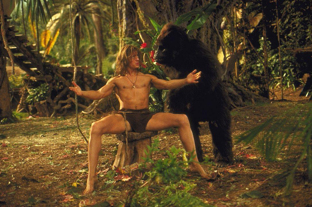 Seit dem Tag, an dem George (Brendan Fraser) als Baby aus einem Flugzeug mitten in den Dschungel gefallen ist, hat er einen intelligenten Beschütze... - Bildquelle: Disney Enterprises Inc.