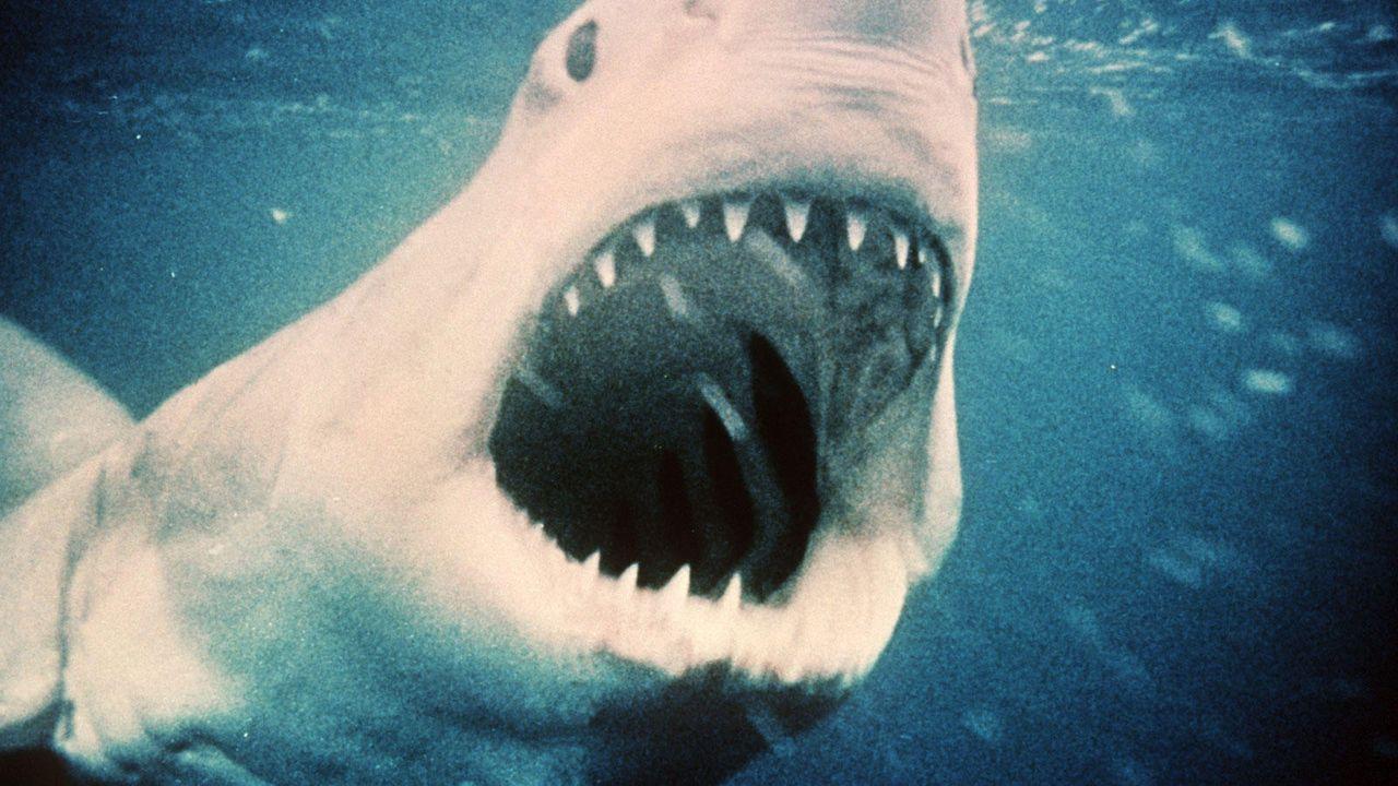 Spielberg weißer hai - Bildquelle: dpa