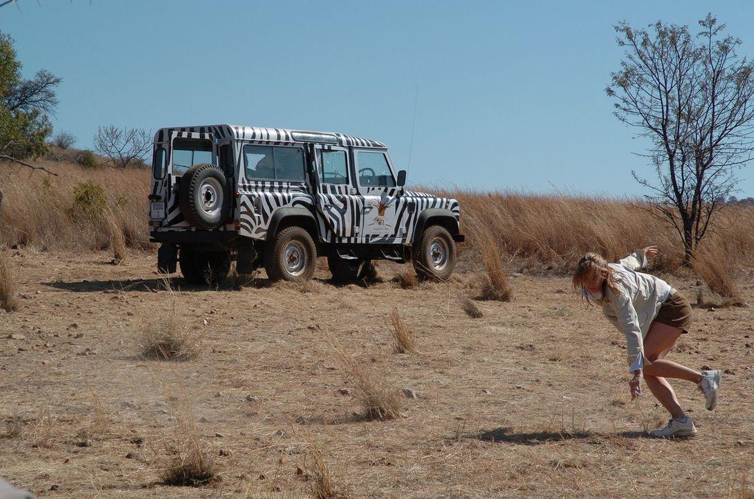 Um an die Autoschlüssel heranzukommen, verlässt Amy (Bridget Moynahan) den schützenden Jeep. Diese Beute wollen sich die ausgehungerten Löwen nicht...