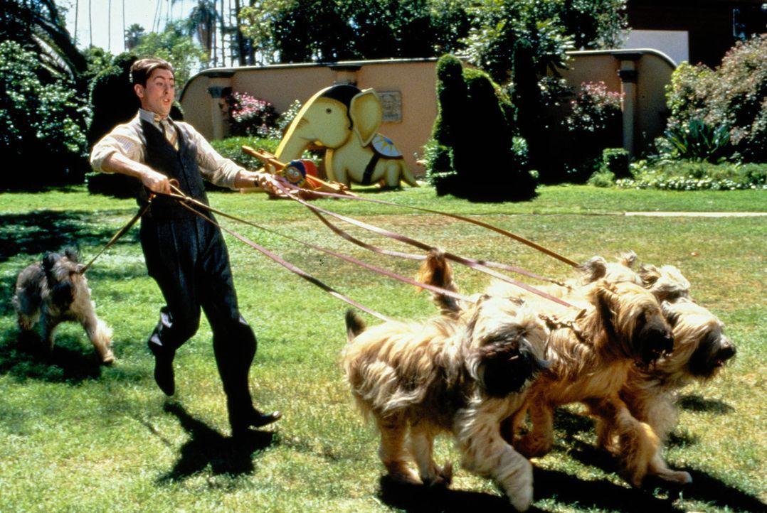 Der Tierpfleger Dick (Alan Cumming) hat mit den Hunden alle Hände voll zu tun. - Bildquelle: Columbia Pictures