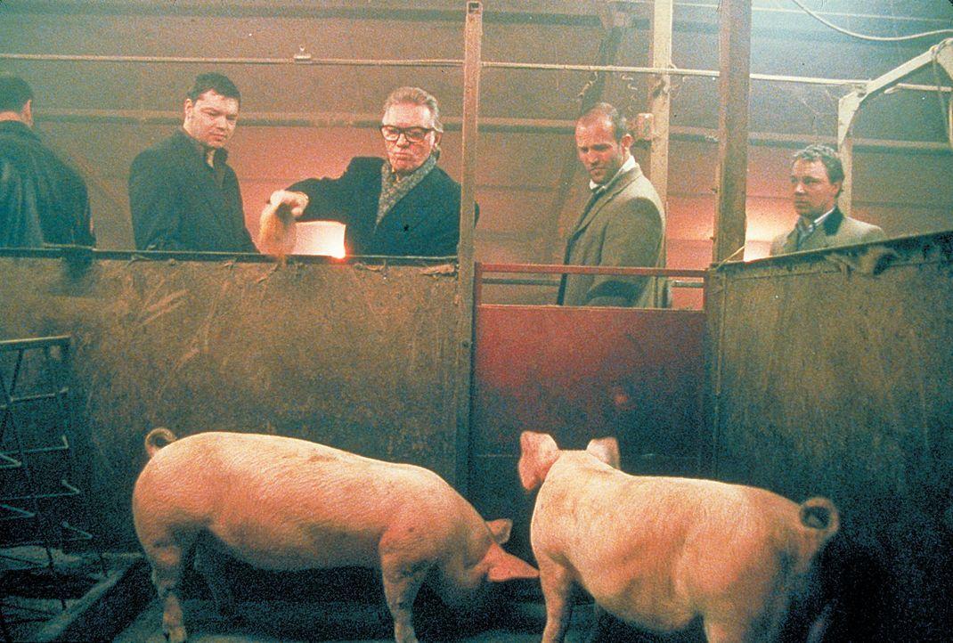 Haben weder Geld noch funktionsfähigen Boxer: Turkish (Jason Statham, r.) und Tommy (Stephen Graham, l.). Aber sie haben den eiskalten Schweinezüc... - Bildquelle: 2003 Sony Pictures Television International. All Rights Reserved.