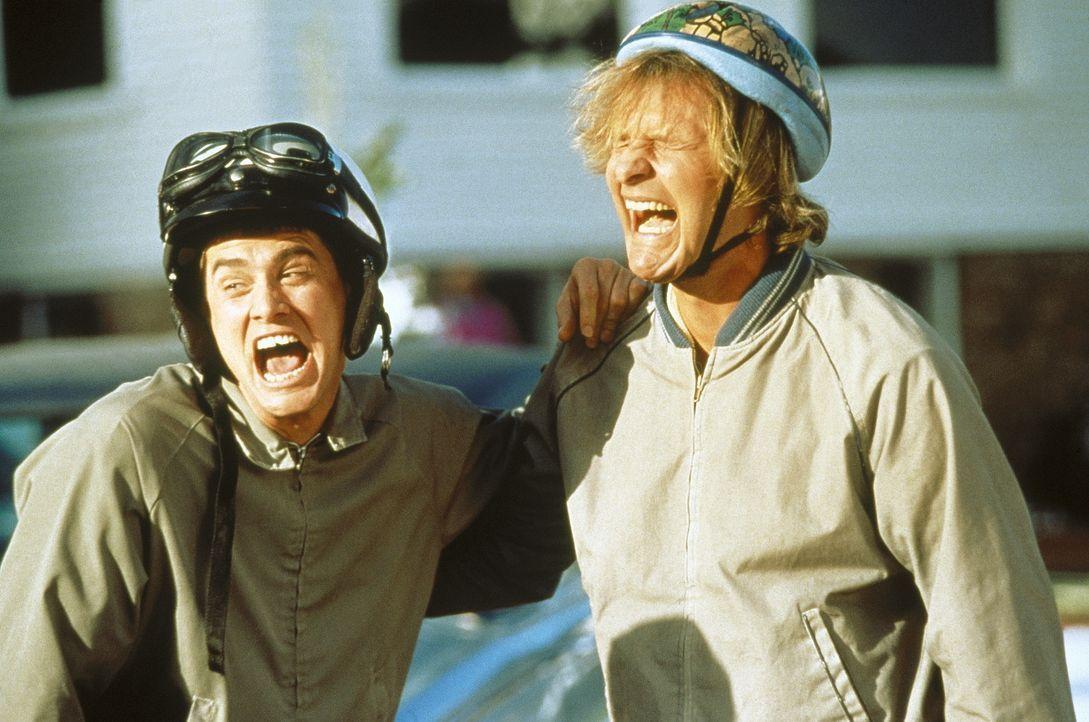 Chaos auf niedrigem Niveau: Llyod (Jim Carrey, l) und Harry (Jeff Daniels, r.) fühlen sich jedoch pudelwohl ... - Bildquelle: New Line Cinema