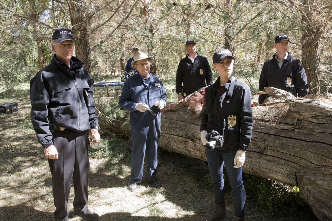 Als ein Navy-Offizier im Ruhestand ermordet wird, beginnen Gibbs (Mark Harmon, l.), Ducky (David McCallum, 3.v.l.), Jimmy (Brian Dietzen, 2.v.l.), D... - Bildquelle: Robert Voets CBS Television / Robert Voets