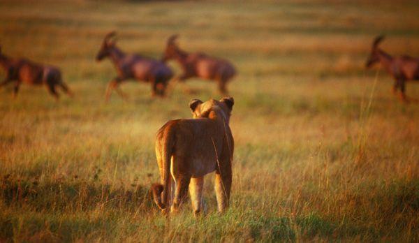 Löwe und Topis - Bildquelle: Richard Gress