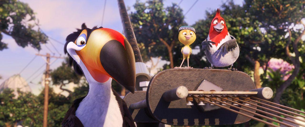 Stehen Blu bei seinem Abenteuer in Rio hilfsbereit zur Seite: Rafael  (l.), Pedro (r.) und Nico (M.) ... - Bildquelle: Blue Sky Studios 2011 Twentieth Century Fox Film Corporation. All rights reserved.