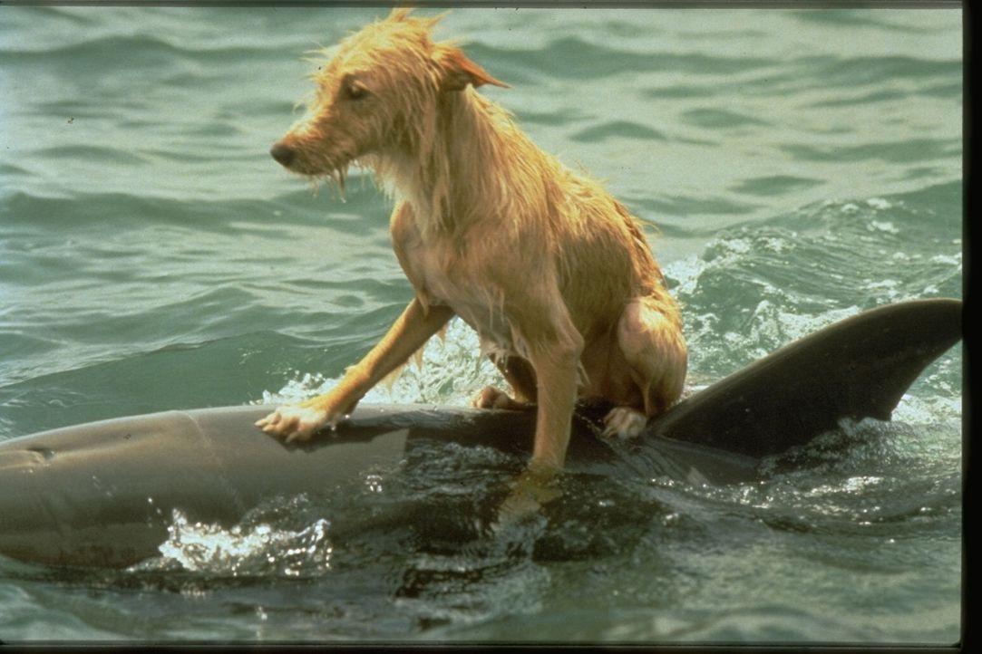 Aus Liebe zu seiner im Wasser lebenden Freundin Roxanne lernt der kleine Zeus schwimmen ...
