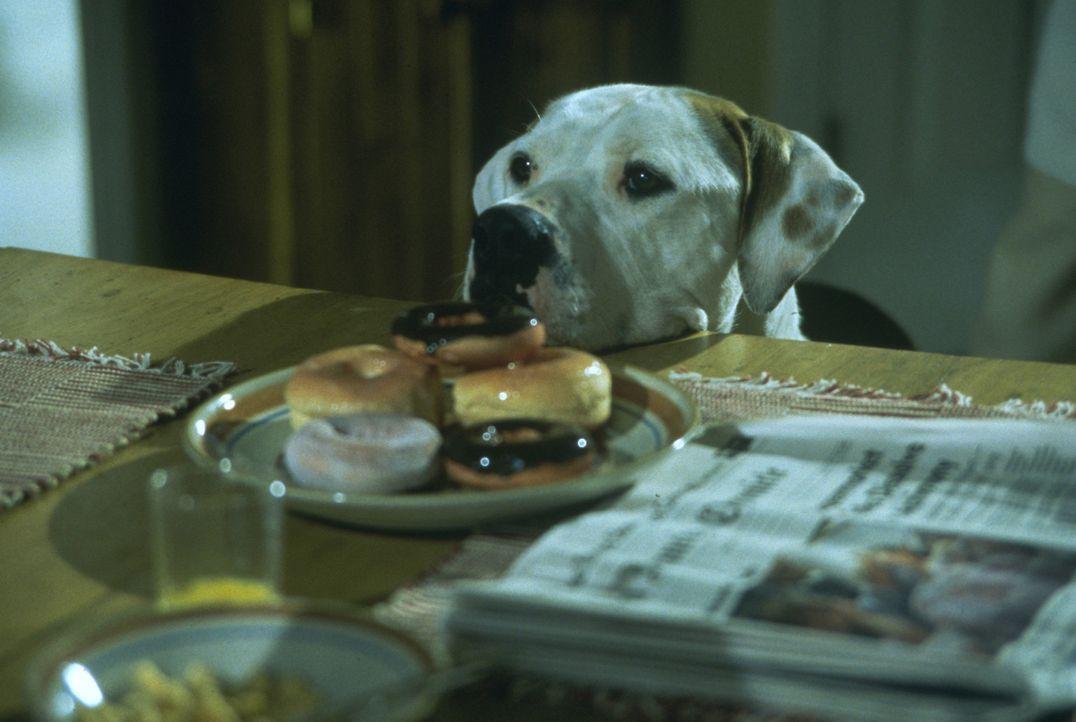 Wenn es irgendwo etwas Essbares gibt, ist die Dogge Chance sofort zur Stelle ... - Bildquelle: Walt Disney Pictures