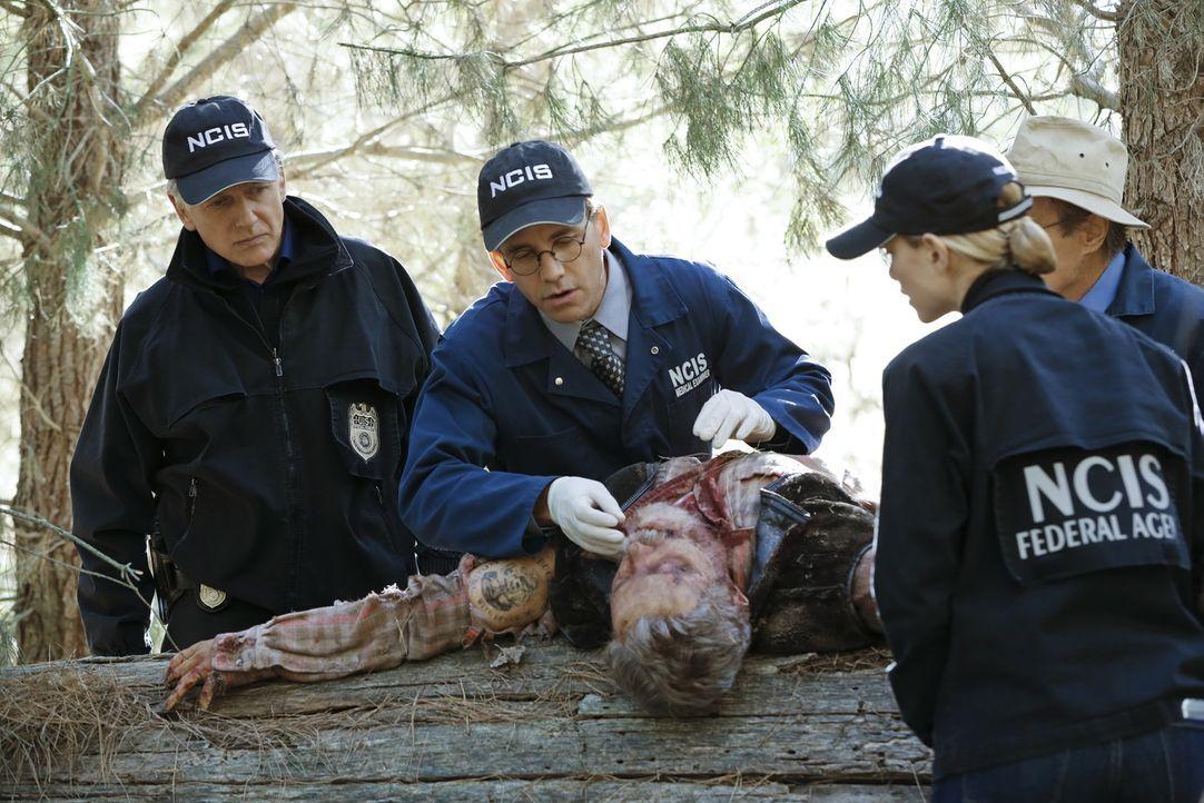 Während den Ermittlungen in einem neuen Mordfall, lüften Gibbs (Mark Harmon, l.), Jimmy (Brian Dietzen, 2.v.l.) und Bishop (Emily Wickersham, 2.v.r.... - Bildquelle: Robert Voets CBS Television