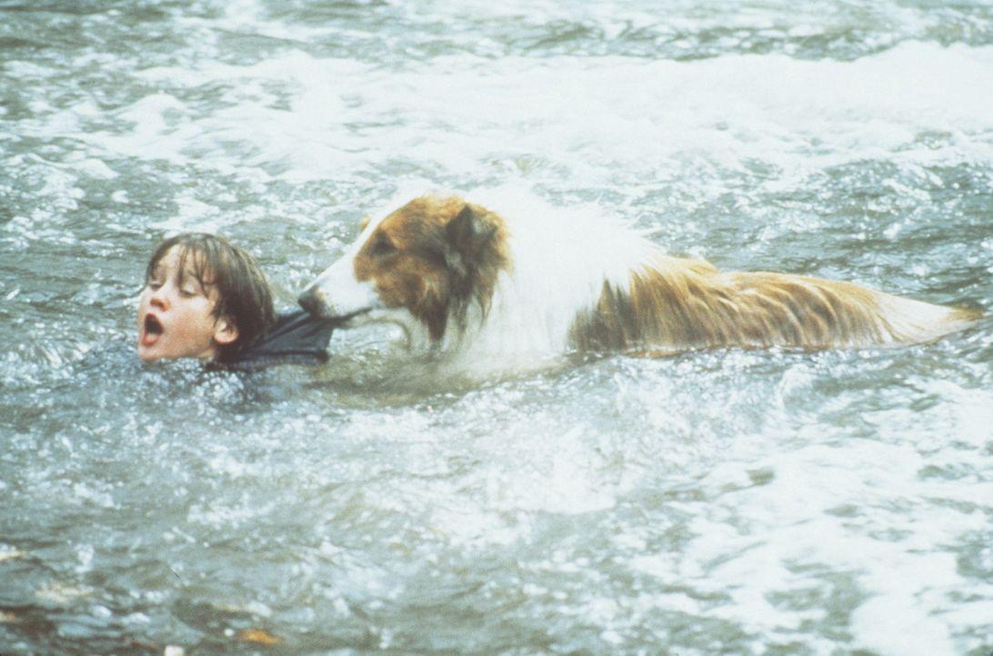 Selbstlos kümmert sich Lassie um ihr Herrchen Matt (Tom Guiry, l.). Eines Tages stürzt sie sich sogar in die Fluten, um Matt aus einem reißenden... - Bildquelle: Paramount Pictures