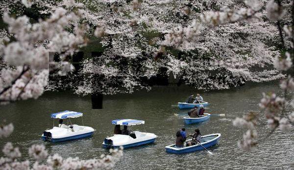 Kirschblüten - Bildquelle: dpa