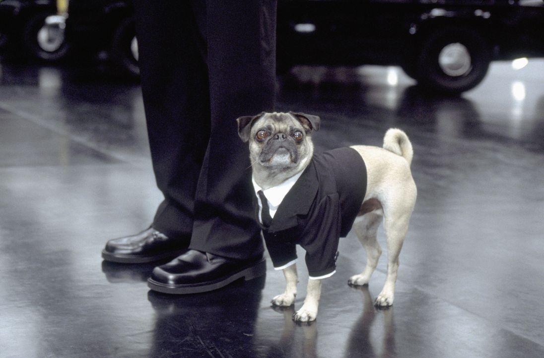 Geht seinen Kollegen Agent J und Agent K oft mit seinem Gequassel auf die Nerven: Frank ... - Bildquelle: 2003 Sony Pictures Television International