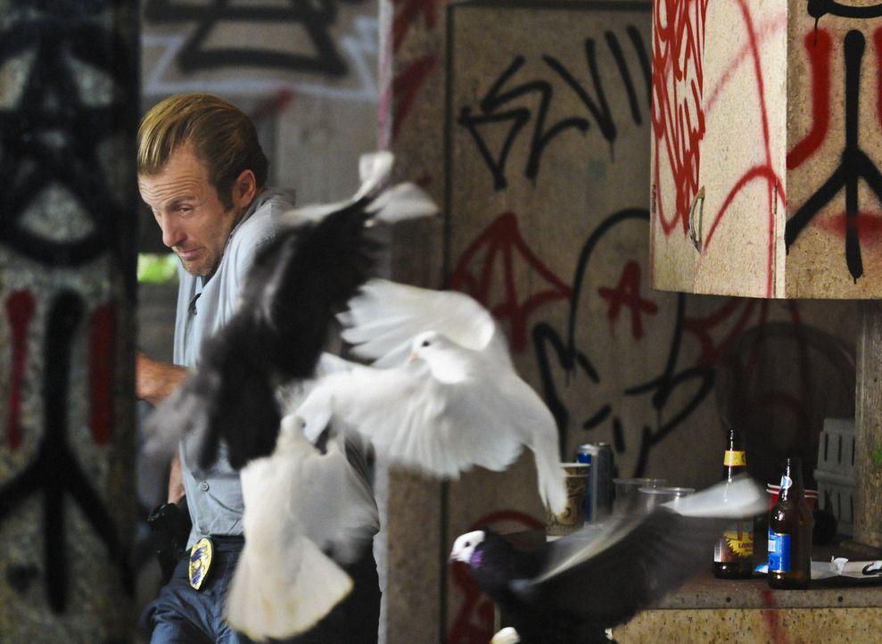 Ermittelt gemeinsam mit Steve in einem äußerst brutalen Fall: Danny (Scott Caan) ... - Bildquelle: 2012 CBS Broadcasting, Inc. All Rights Reserved.