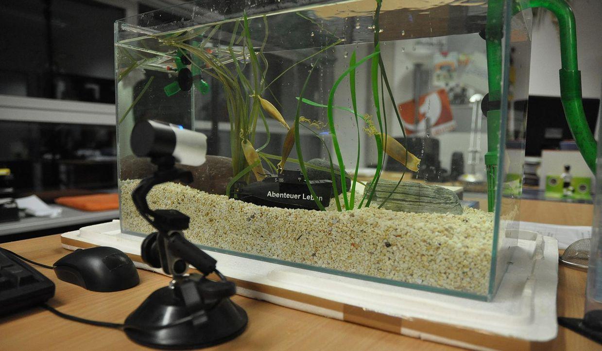 Hai Aquarium  - Bildquelle: Janus TV