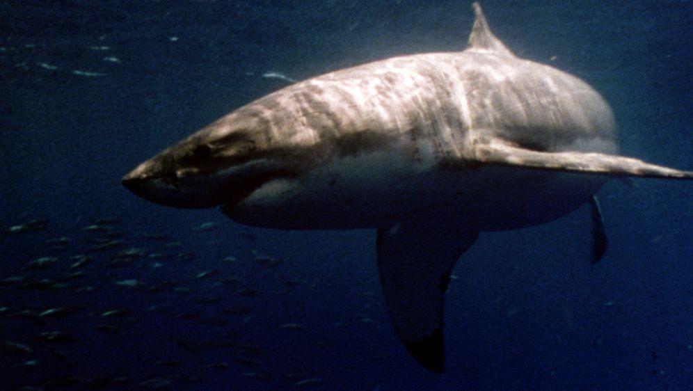Raging Sharks - Killer aus der Tiefe - Bildquelle: 2004 Sharky Productions A.V.V.  All Rights Reserved.