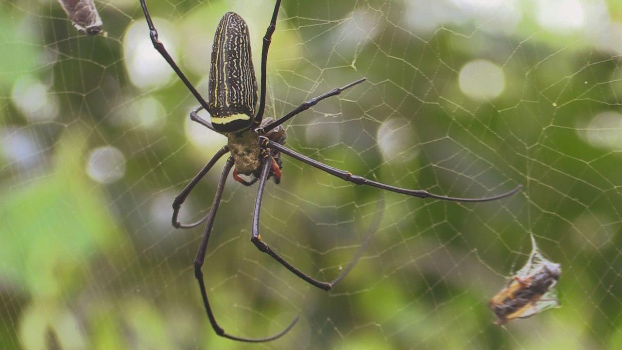 Sumatra 10 - Bildquelle: kabel eins