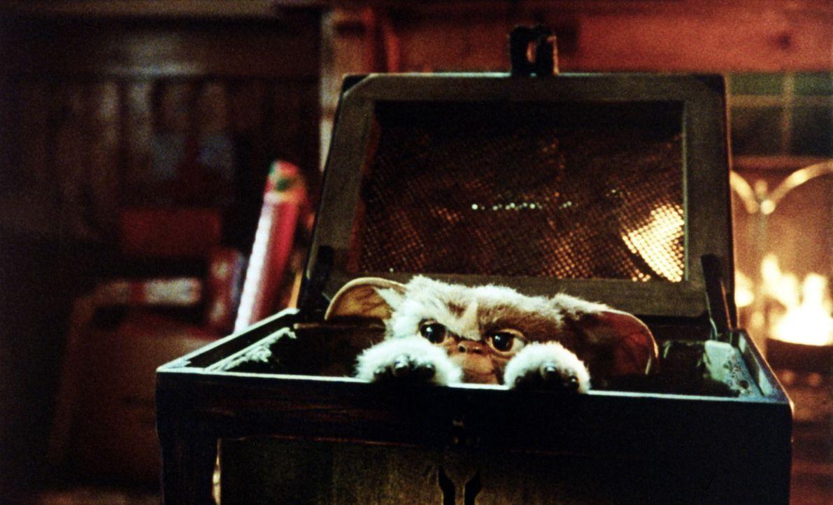 """Das geheimnisvolle Geschenk entpuppt sich als ein süßer, Teddybär-ähnlicher Mogwais. Billy tauft das süße Geschöpf """"Gizmo"""" ... - Bildquelle: Warner Bros."""