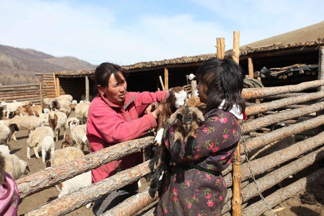 Die 15-jährige Janet Slade (r.) soll in der Mongolei endlich lernen, was es heißt, richtig zu arbeiten ... - Bildquelle: kabel eins