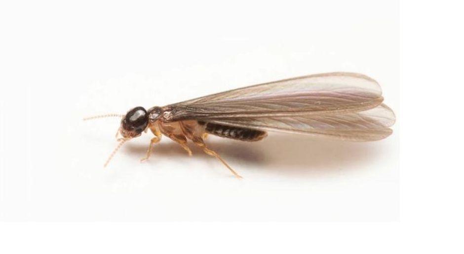 Einfache Hausmittel So Bekampft Man Fliegende Ameisen Im Garten