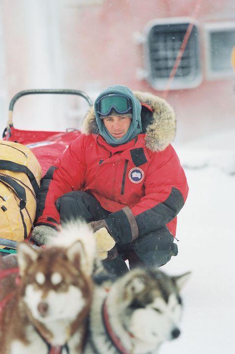 Eines Tages sieht sich der Hundeschlittenführer Jerry Shepard (Paul Walker) gezwungen, seine geliebten Schneehunde in der endlosen Eiswüste zurüc... - Bildquelle: Chris Large Walt Disney Pictures. All rights reserved.