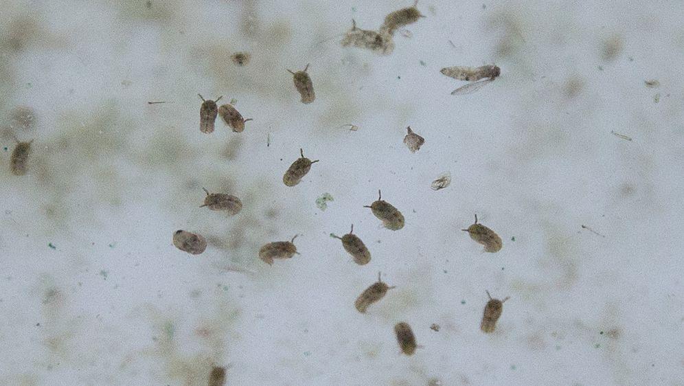 Lebensmittelmotten - Lästige Schädlinge