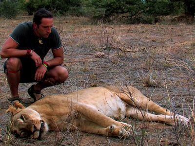 Getötete Löwin - Bildquelle: Richard Gress