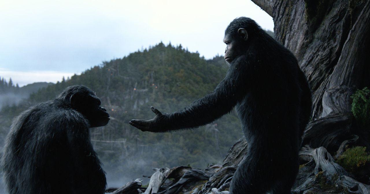 Immer wieder versucht Caesar (Andy Serkis, r.), Koba (Toby Kebbell, l.) zur Mäßigung gegenüber den Menschen aufzurufen, doch dieser will nur noch ei... - Bildquelle: 2014 Twentieth Century Fox Film Corporation.  All rights reserved.