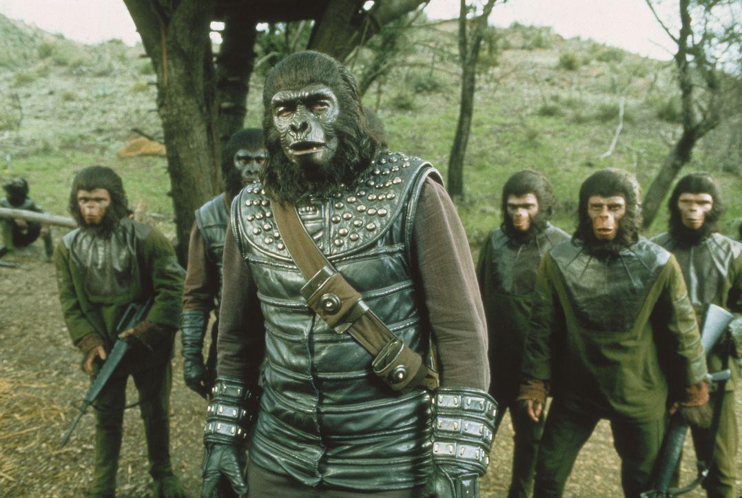 Gorilla-General Aldo (Claude Akins) und seine Schimpansenkrieger machen mal wieder Ärger ... - Bildquelle: 20TH CENTURY FOX FILM CORPORATION