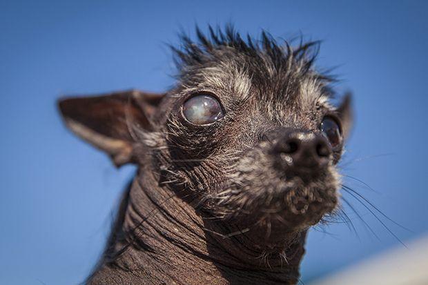 Rue wurde im Vorfeld als heißer Anwärter auf den Titel des hässlichsten Hund...