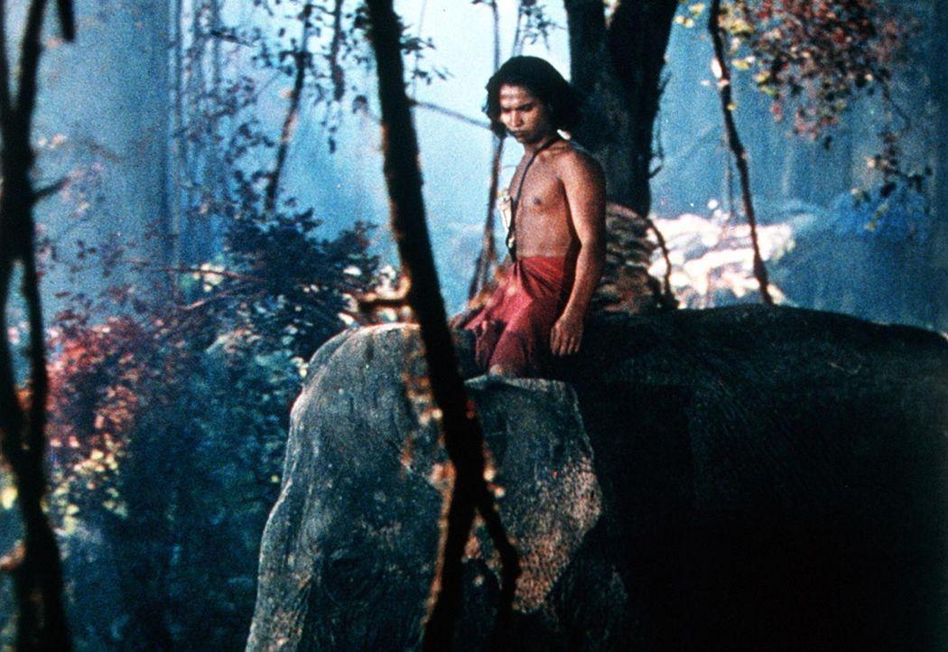Nach einem Angriff des mordlüsternen Tigers Schir Khan floh der junge Mowgli (Sabu) in den Dschungel, wo er bis heute lebt ... - Bildquelle: United Artists