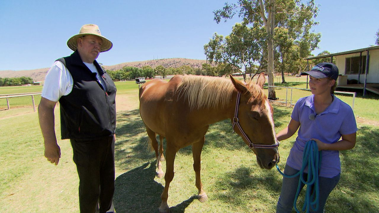 Eines von Emmie Wehrs Pferden soll an dem großen Rennen auf der Pferderennbahn in Alice Spring teilnehmen, doch dann kommt alles anders. Kann Knoche... - Bildquelle: kabel eins
