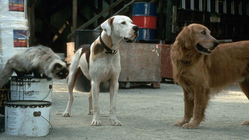 Ein tierisches Trio - Wieder unterwegs - Bildquelle: Walt Disney Pictures