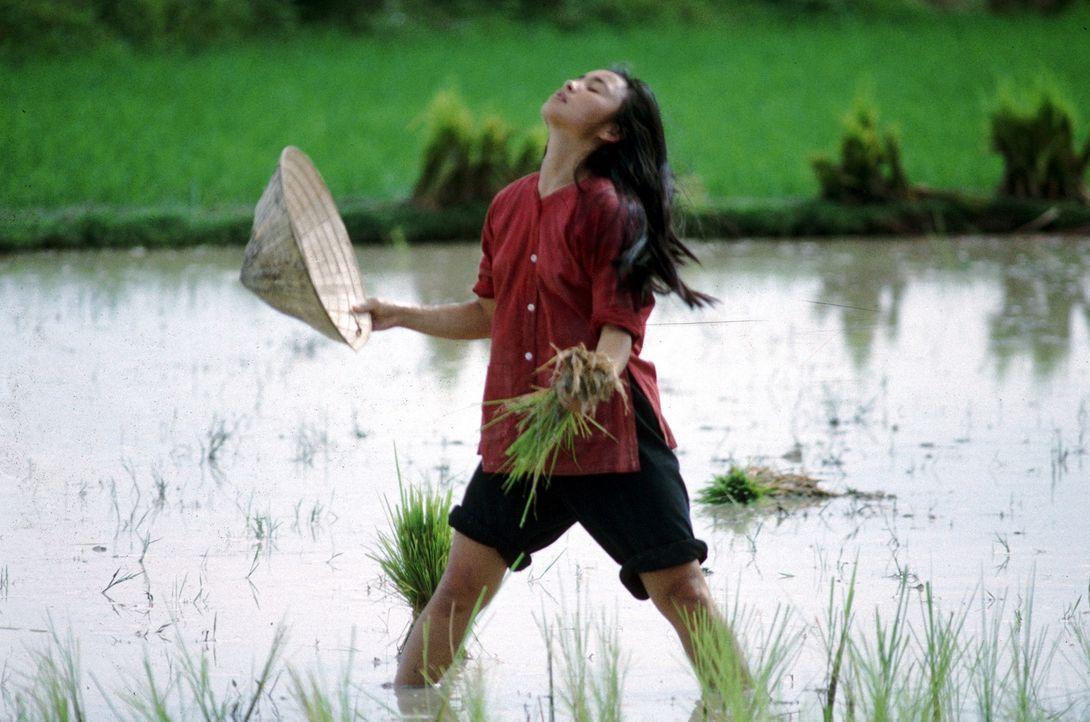 Vietnam zur Zeit des Krieges: Le Ly (Hiep Thi Le) ist die Tochter eines Reisbauern in Vietnam. Mit ihrer Mutter und ihren Geschwistern arbeitet sie... - Bildquelle: Warner Bros.