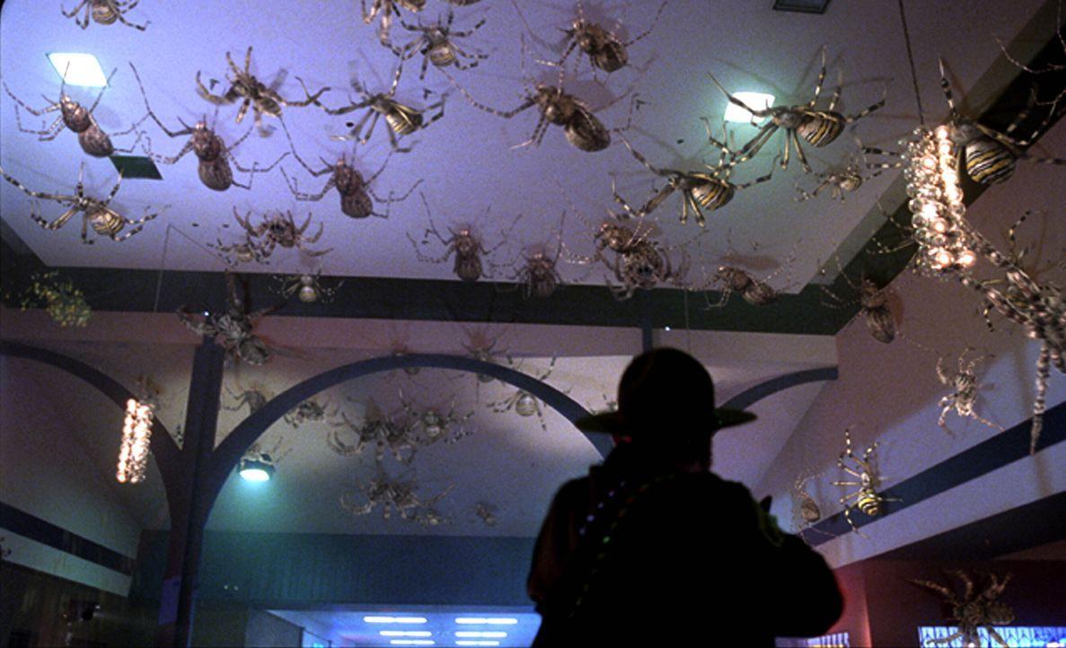 Die mutierten Spinnen greifen an ... - Bildquelle: Warner Bros. Pictures