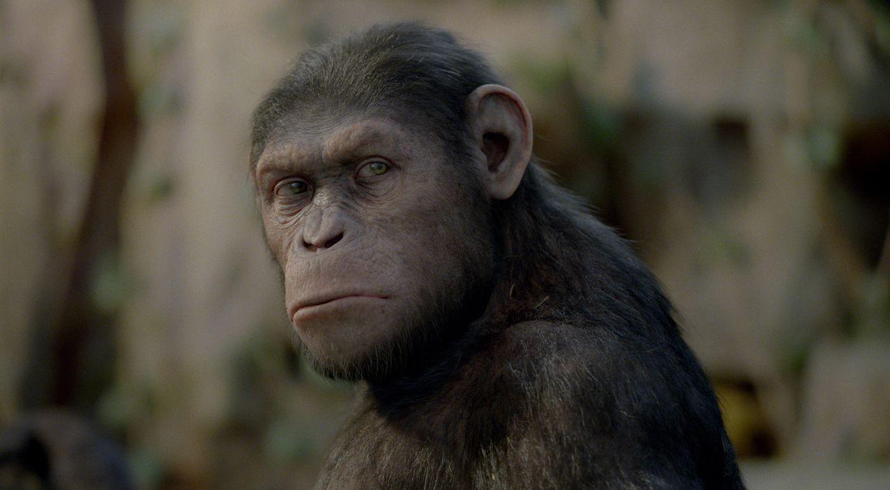 Endlich darf Will seinen geliebten Schimpansen aus dem Tierheim holen und wieder mit nach Hause nehmen. Doch Caesar entschließt sich, dort zu bleibe... - Bildquelle: 2011 Twentieth Century Fox Film Corporation. All rights reserved.