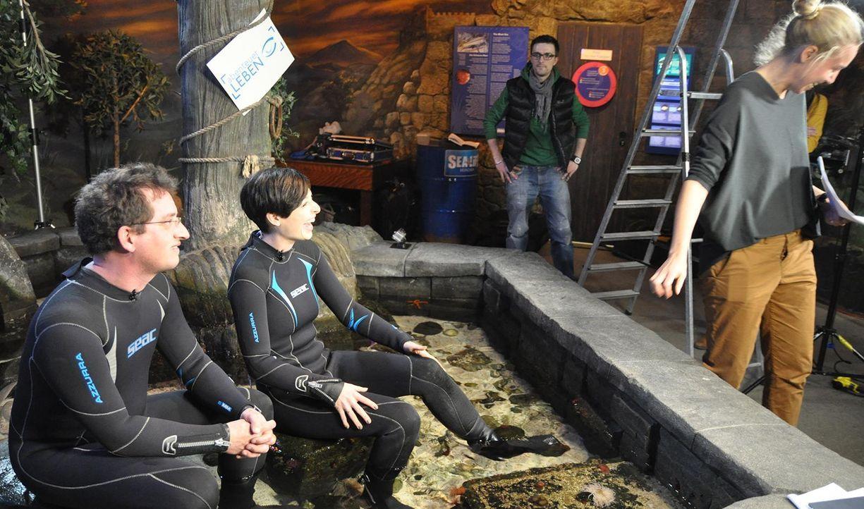 Sea life Tauchanzug - Bildquelle: Janus TV