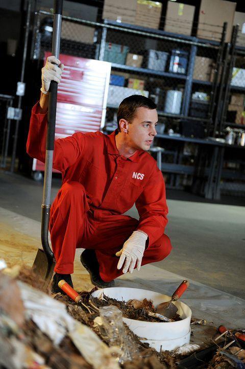 Sucht nach Hinweisen in einem neuen Mordfall: McGee (Sean Murray) ... - Bildquelle: CBS Television