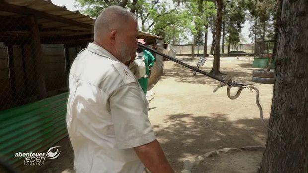 Abenteuer Leben - Abenteuer Leben - Donnerstag: Der Schlangenmann Von Simbabwe