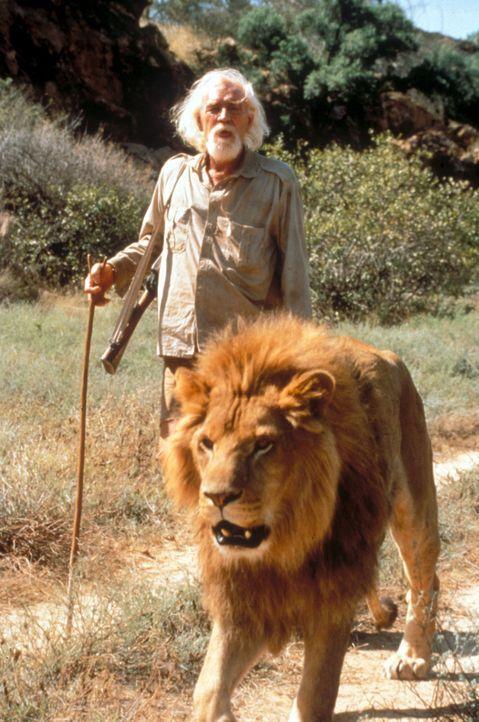Setzt alles daran, den Löwen ein Leben in freier Wildbahn zu ermöglichen: George Adamson (Richard Harris) ... - Bildquelle: Spartan Home Entertainment