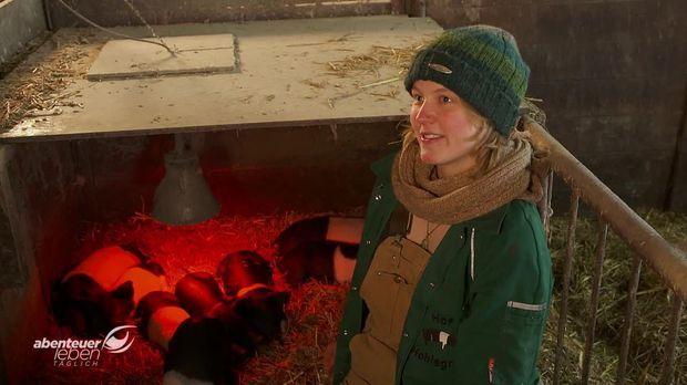 Abenteuer Leben - Abenteuer Leben - Montag: Die Vergessene Schweinerasse