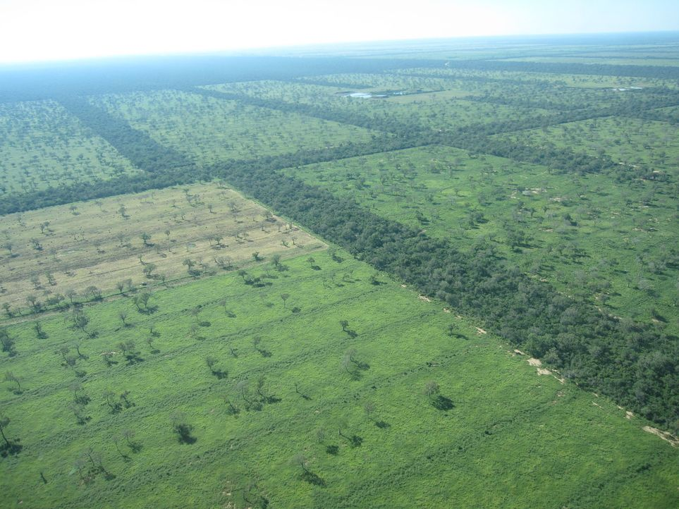 El Patrón und Großgrundbesitzer Don Manfredo wittert das große Geschäft: Rindfleisch für die EU und Deutschland in Paraguay zu produzieren. Ein... - Bildquelle: kabel eins