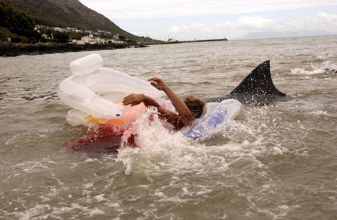 Vor der Küste Floridas treiben Haie ihr Unwesen. Doch die Küstenwache unternimmt nichts, um die Touristen nicht zu verunsichern ... - Bildquelle: CBS Television