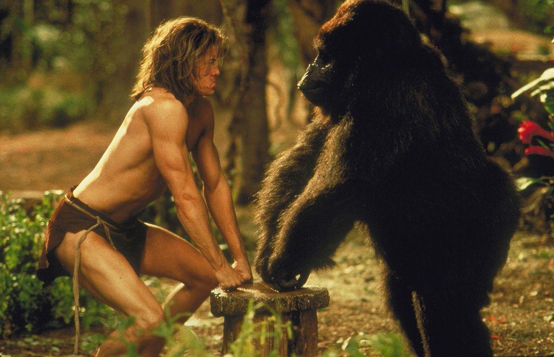 Als Gorilla Ape in Gefahr gerät, kann nicht einmal mehr die Liebe George (Brendan Fraser) in San Francisco halten ... - Bildquelle: Disney Enterprises Inc.