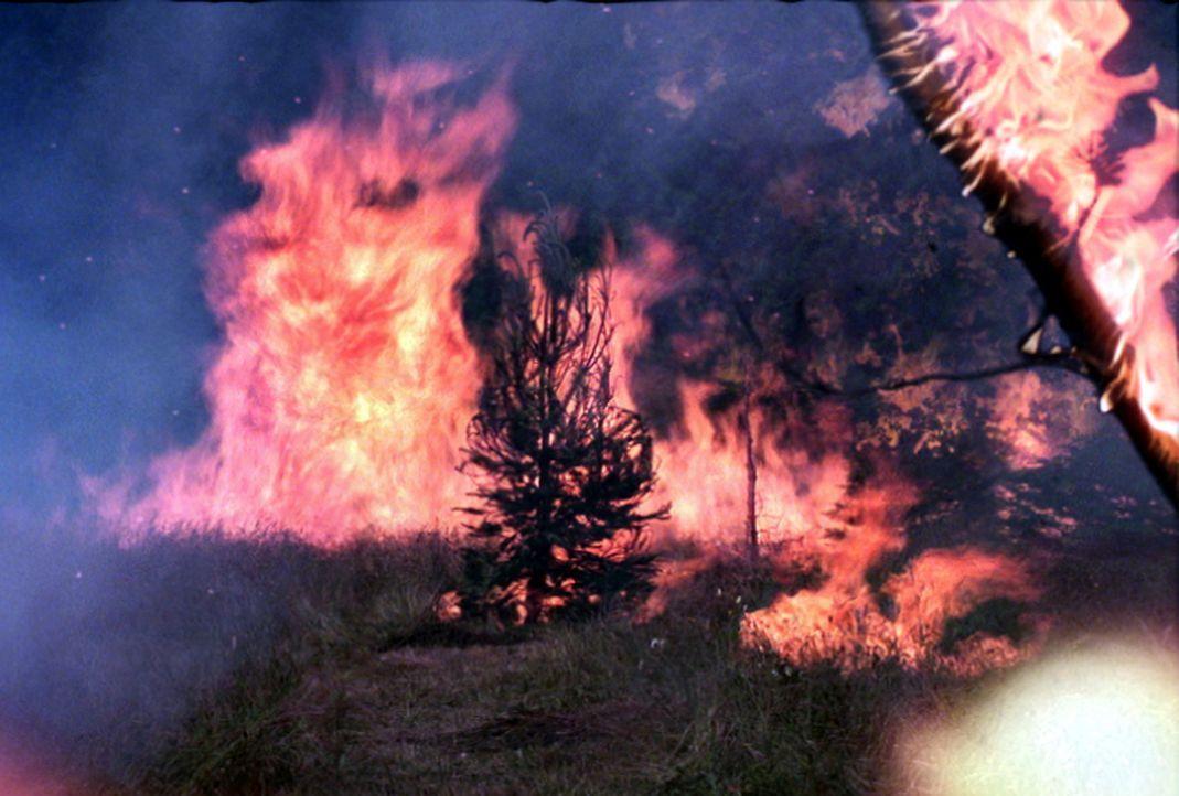 Das Feuer gerät völlig außer Kontrolle ... - Bildquelle: New Concorde
