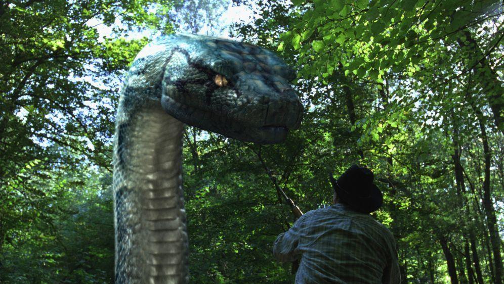 Boa vs. Python - Duell der Killerschlangen - Bildquelle: Sony Pictures Television International. All Rights Reserved.