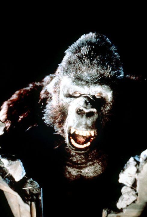 Gleich nach seiner Operation macht sich King Kong auf die Suche nach seiner großen Liebe - Lady Kong ... - Bildquelle: Paramount Pictures