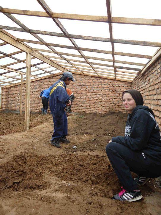 In der Mongolei muss Jenny (vorne) beim Bau eines Gewächshauses mithelfen ... - Bildquelle: kabel eins