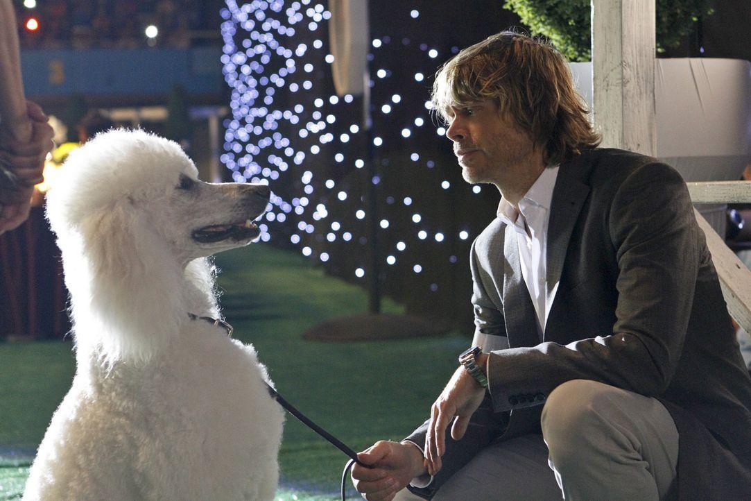 Auf einer Hundeshow muss Deeks (Eric Christian Olsen) verdeckt ermitteln, um einen Mordfall aufzuklären ... - Bildquelle: CBS Studios Inc. All Rights Reserved.
