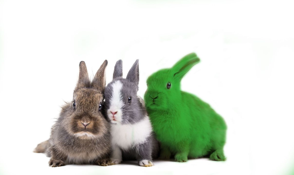 Fotolia_80274988_Subscription_Monthly_M_Hase - Bildquelle: drubig-photo - Fotolia