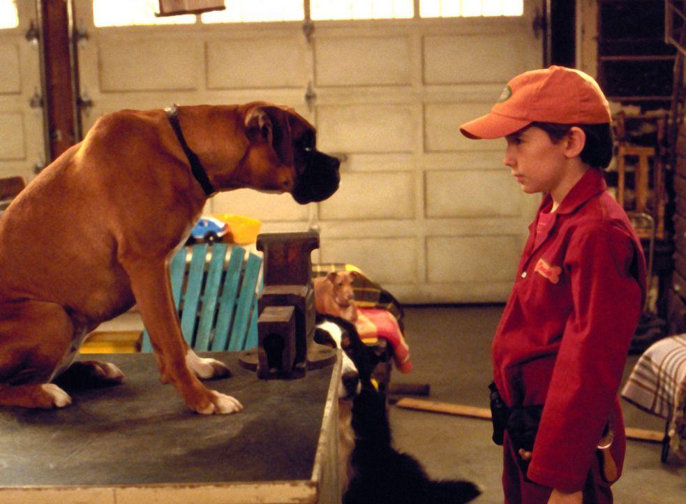 Seitdem der 12jährige Owen (Liam Aiken) einen intergalaktischen Kurzschluss versteht er plötzlich die Hunde-Sprache und beschließt gemeinsam mit... - Bildquelle: Metro-Goldwyn-Mayer Studios Inc. All Rights Reserved.